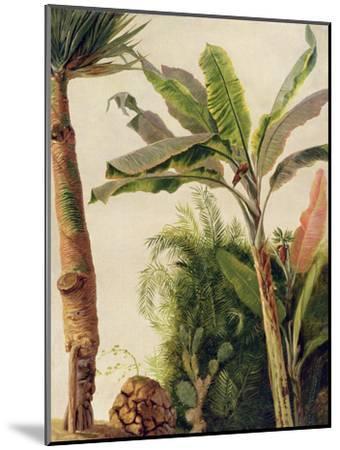 Banana Tree, C.1865-Frederic Edwin Church-Mounted Giclee Print