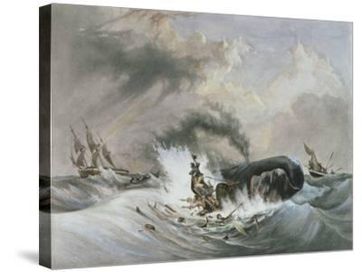 The Whale, 1836-Jean Francois Garneray-Stretched Canvas Print