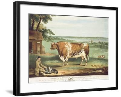 A Short Horned Bull, Patriot, Engraved by William Ward, Shrewsbury, 1810-Thomas Weaver-Framed Giclee Print
