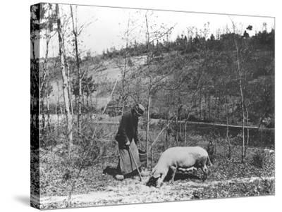 Searching for Truffles, C.1900--Stretched Canvas Print