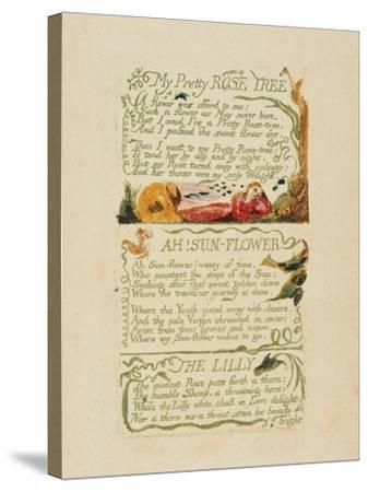 'My Pretty Rose Tree,' and 'Ah! Sun-Flower,' and 'The Lily,' from 'Songs of Experience,' 1794-William Blake-Stretched Canvas Print
