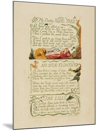 'My Pretty Rose Tree,' and 'Ah! Sun-Flower,' and 'The Lily,' from 'Songs of Experience,' 1794-William Blake-Mounted Giclee Print