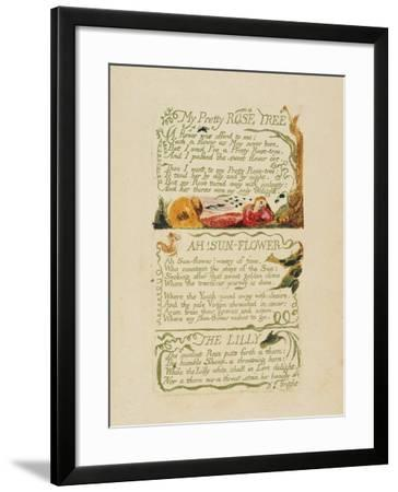 'My Pretty Rose Tree,' and 'Ah! Sun-Flower,' and 'The Lily,' from 'Songs of Experience,' 1794-William Blake-Framed Giclee Print