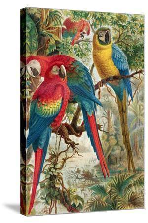 """Macaws, Plate from """"Brehms Tierleben: Allgemeine Kunde Des Tierreichs"""", Vol.5, P.60, Published by…-German School-Stretched Canvas Print"""