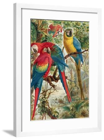 """Macaws, Plate from """"Brehms Tierleben: Allgemeine Kunde Des Tierreichs"""", Vol.5, P.60, Published by…-German School-Framed Giclee Print"""