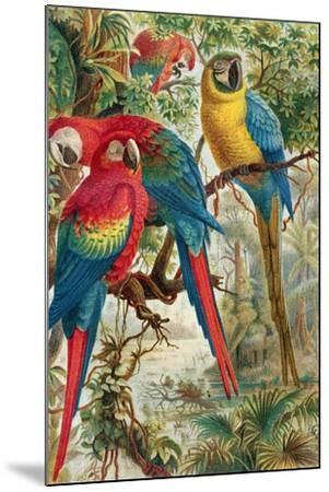 """Macaws, Plate from """"Brehms Tierleben: Allgemeine Kunde Des Tierreichs"""", Vol.5, P.60, Published by…-German School-Mounted Giclee Print"""