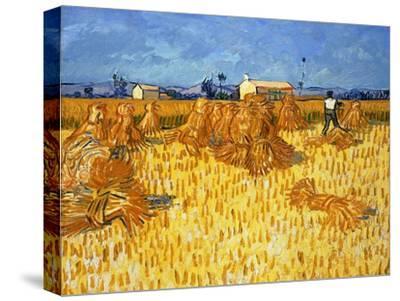 Harvest in Provence, June 1888-Vincent van Gogh-Stretched Canvas Print