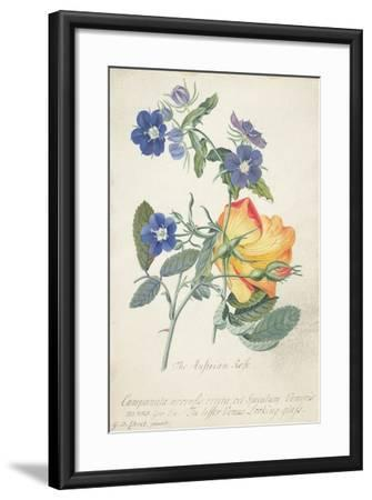 The Austrian Rose, Intertwined Spray of the Two Seperate Species-Georg Dionysius Ehret-Framed Giclee Print