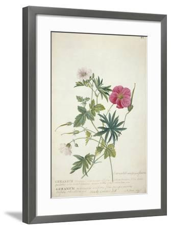 Geranium. Two Intertwined Stems of Different Species, 1767-Georg Dionysius Ehret-Framed Giclee Print