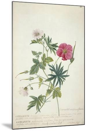 Geranium. Two Intertwined Stems of Different Species, 1767-Georg Dionysius Ehret-Mounted Giclee Print