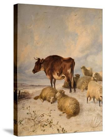 Cows and Sheep in Snowscape, 1864-Thomas Sidney Cooper-Stretched Canvas Print