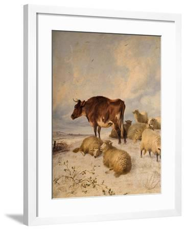 Cows and Sheep in Snowscape, 1864-Thomas Sidney Cooper-Framed Giclee Print