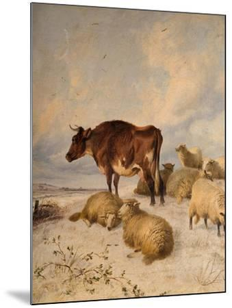 Cows and Sheep in Snowscape, 1864-Thomas Sidney Cooper-Mounted Giclee Print