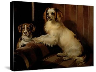Bon(E)Y and Var, C.1843-Edwin Henry Landseer-Stretched Canvas Print