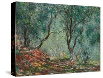 Olive Trees in the Moreno Garden, 1884-Claude Monet-Stretched Canvas Print