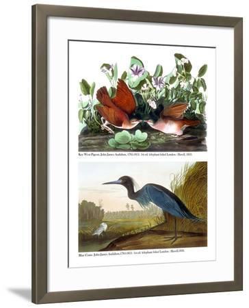 Key West Pigeon and Blue Crane, C.1833-36-John James Audubon-Framed Giclee Print