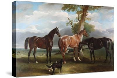 The 6th Duke's Favourite Hunters and Dogs, 1857-John E^ Ferneley-Stretched Canvas Print
