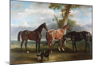 The 6th Duke's Favourite Hunters and Dogs, 1857-John E^ Ferneley-Mounted Giclee Print