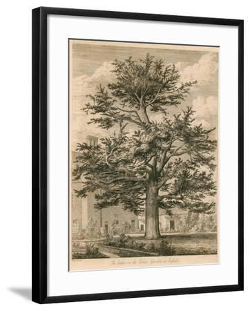 The Cedar in the Palace Garden at Enfield, Middlesex-Jacob George Strutt-Framed Giclee Print