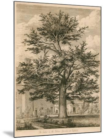 The Cedar in the Palace Garden at Enfield, Middlesex-Jacob George Strutt-Mounted Giclee Print