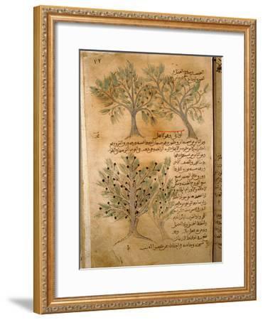 Folio 22R of the Arabic Version of Dioscorides' De Materia Medica--Framed Giclee Print