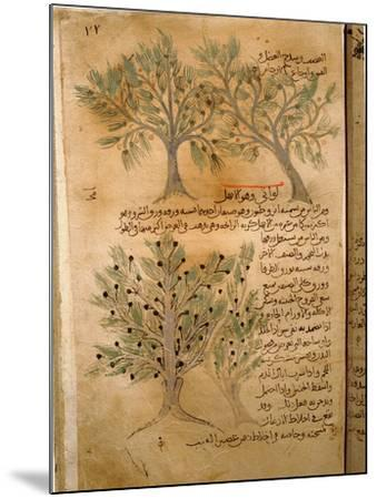 Folio 22R of the Arabic Version of Dioscorides' De Materia Medica--Mounted Giclee Print
