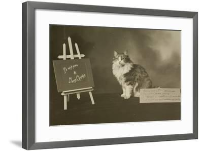 Cat Study Number 6--Framed Photographic Print