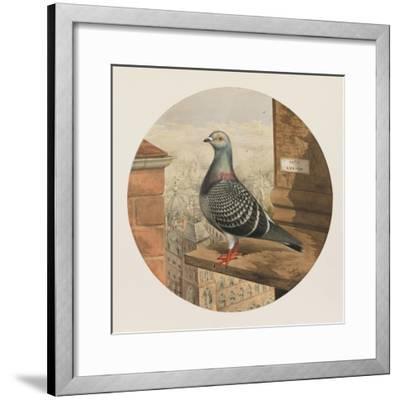 Racing Pigeons, Paris to London, 1880-Henry Stephen Ludlow-Framed Giclee Print