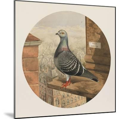 Racing Pigeons, Paris to London, 1880-Henry Stephen Ludlow-Mounted Giclee Print