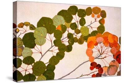 Populus Tremula, or European Aspen, 1907-09-Philippe Robert-Stretched Canvas Print