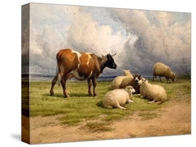 A Cow and Five Sheep, 1887-Thomas Sidney Cooper-Stretched Canvas Print