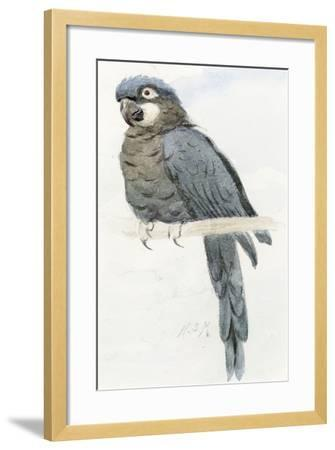 Hyacinth Macaw, C.1890-Henry Stacey Marks-Framed Giclee Print