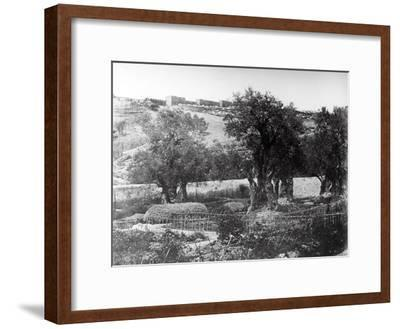 Gethsemane, 1857-James Robertson and Felice Beato-Framed Photographic Print