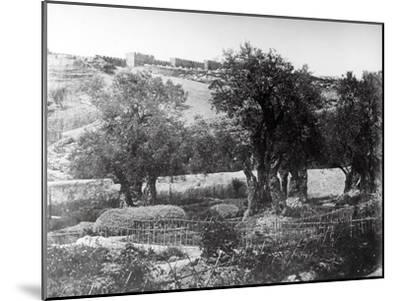 Gethsemane, 1857-James Robertson and Felice Beato-Mounted Photographic Print