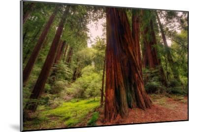 Welcome to Muir Woods 4-Vincent James-Mounted Photographic Print