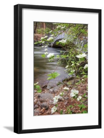 Dogwood Bridge-Vincent James-Framed Photographic Print