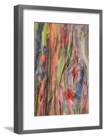 Rainbow Eucalyptus Detail, Kauai-Vincent James-Framed Photographic Print