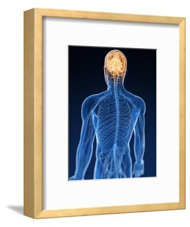 Human Nervous System, Artwork-SCIEPRO-Framed Premium Photographic Print