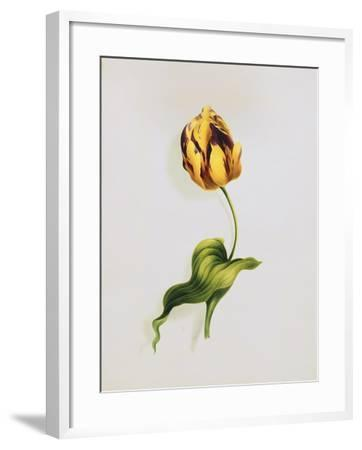 A Parrot Tulip-James		 Holland-Framed Giclee Print
