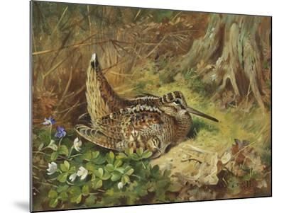 A Woodcock and Chicks-Archibald Thorburn-Mounted Giclee Print