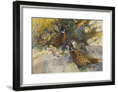 Cock Pheasants under a Beech Tree-Frank Southgate-Framed Giclee Print