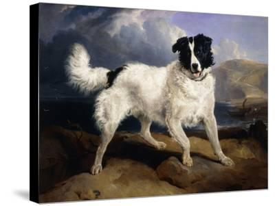 A Portrait of Neptune-Edwin Henry Landseer-Stretched Canvas Print