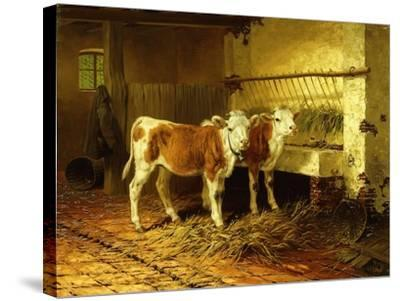 Two Calves in a Barn-Walter Hunt-Stretched Canvas Print