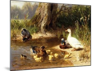 Ducks at the Water's Edge-Carl Jutz-Mounted Giclee Print
