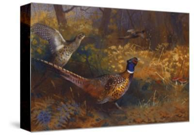 A Cock and Hen Pheasant at the Edge of a Wood-Archibald Thorburn-Stretched Canvas Print