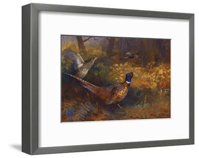 A Cock and Hen Pheasant at the Edge of a Wood-Archibald Thorburn-Framed Giclee Print