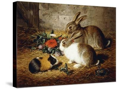 Escaped: Two Rabbits and Guinea Pig-Alfred R. Barber-Stretched Canvas Print