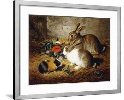 Escaped: Two Rabbits and Guinea Pig-Alfred R. Barber-Framed Giclee Print