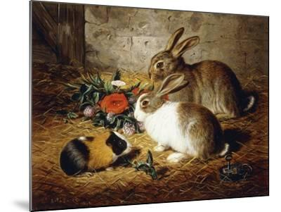Escaped: Two Rabbits and Guinea Pig-Alfred R. Barber-Mounted Giclee Print