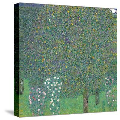 Rosebushes Under the Trees-Gustav Klimt-Stretched Canvas Print